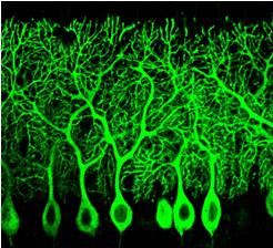 Cellular biophysics organization nagoya city university graduate school of pharmaceutical - Pure kindje ...